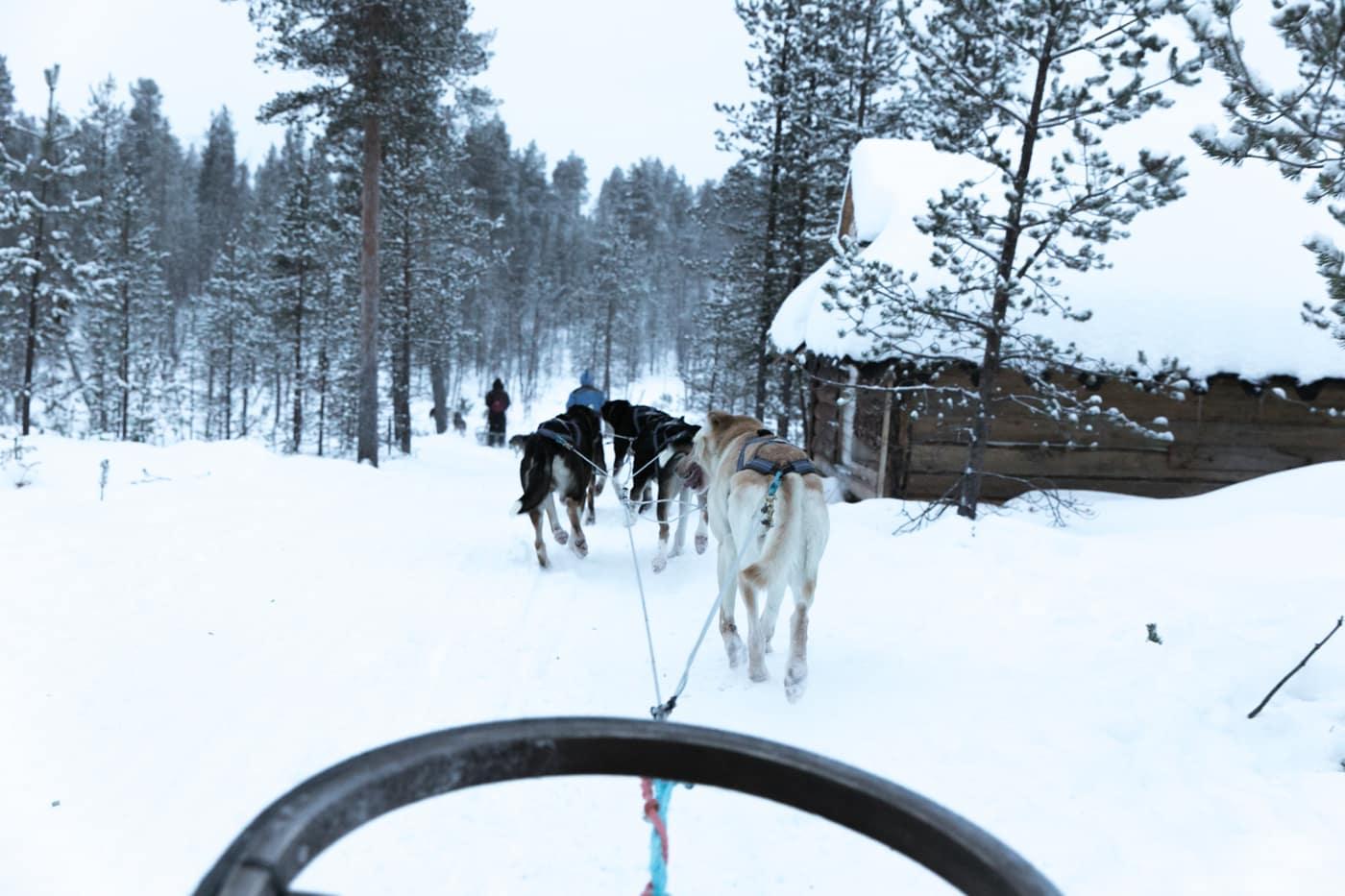 ID5A5814 - Récap de notre voyage en Laponie Finlandaise