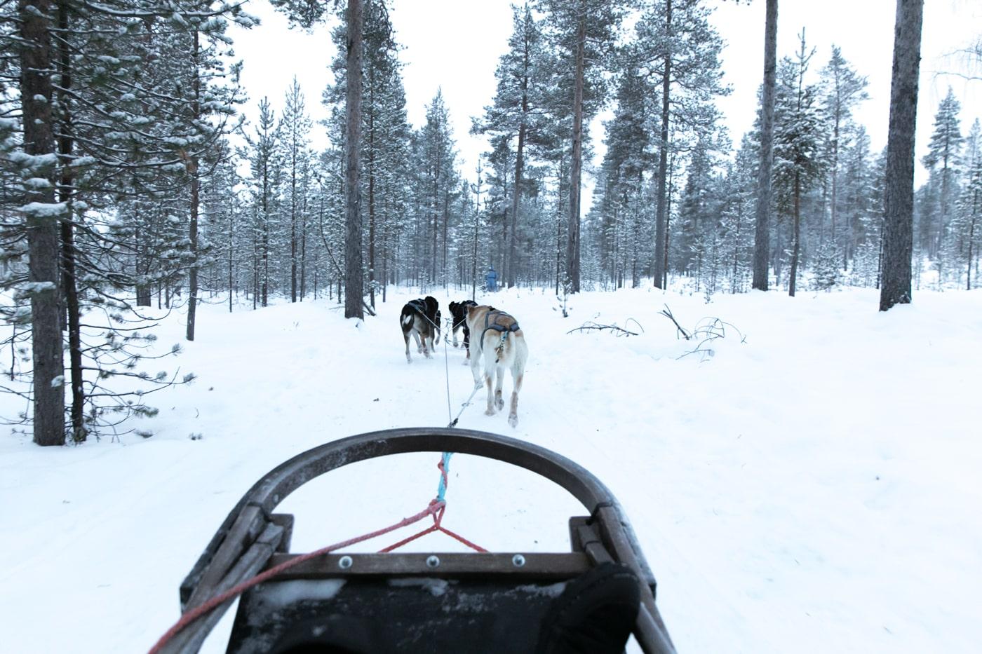 ID5A5828 - 5 activités à faire en Laponie