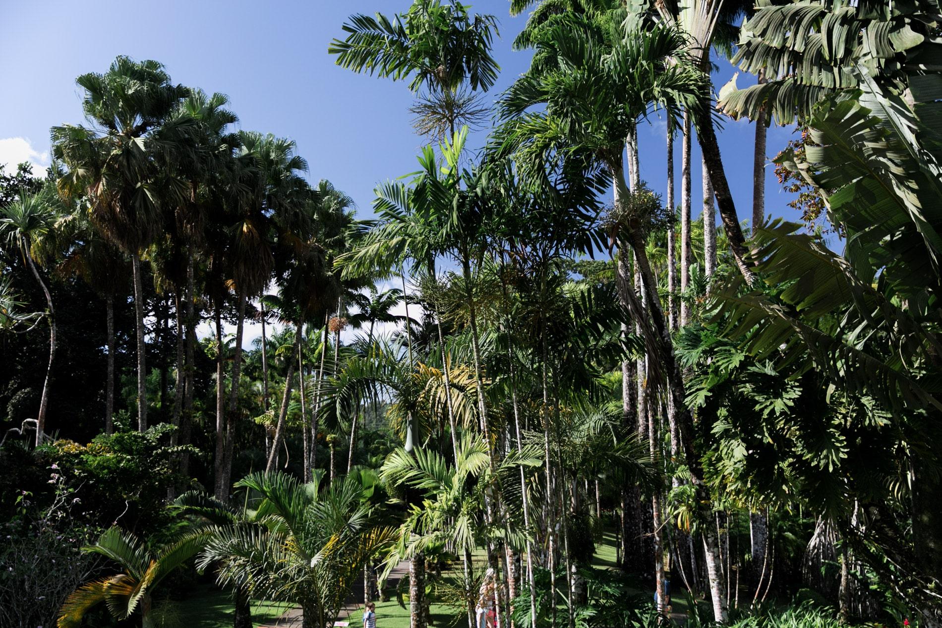ID5A1661 - Le TOP 15 des activités à faire en Martinique