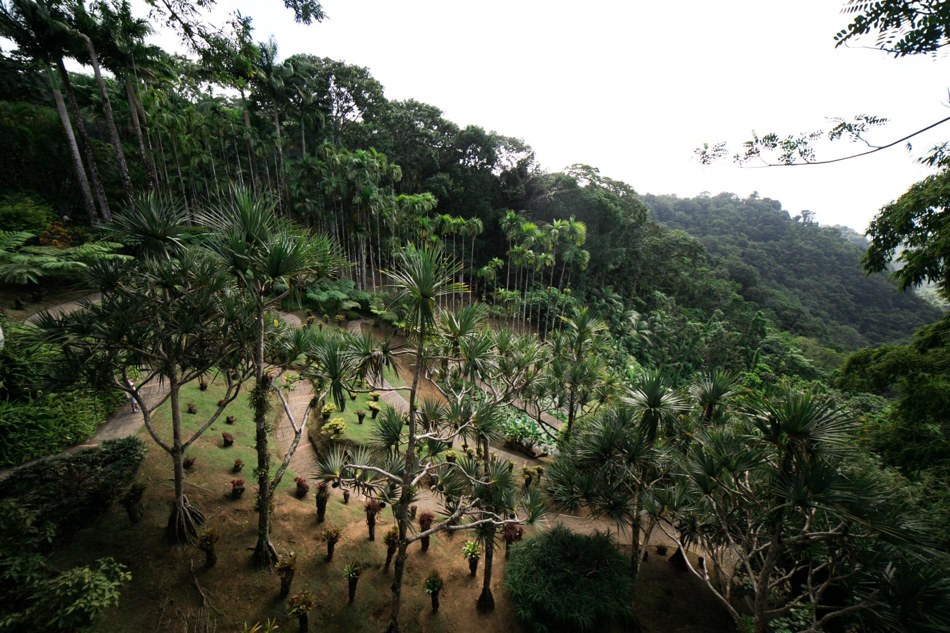 ID5A1721 - Le TOP 15 des activités à faire en Martinique