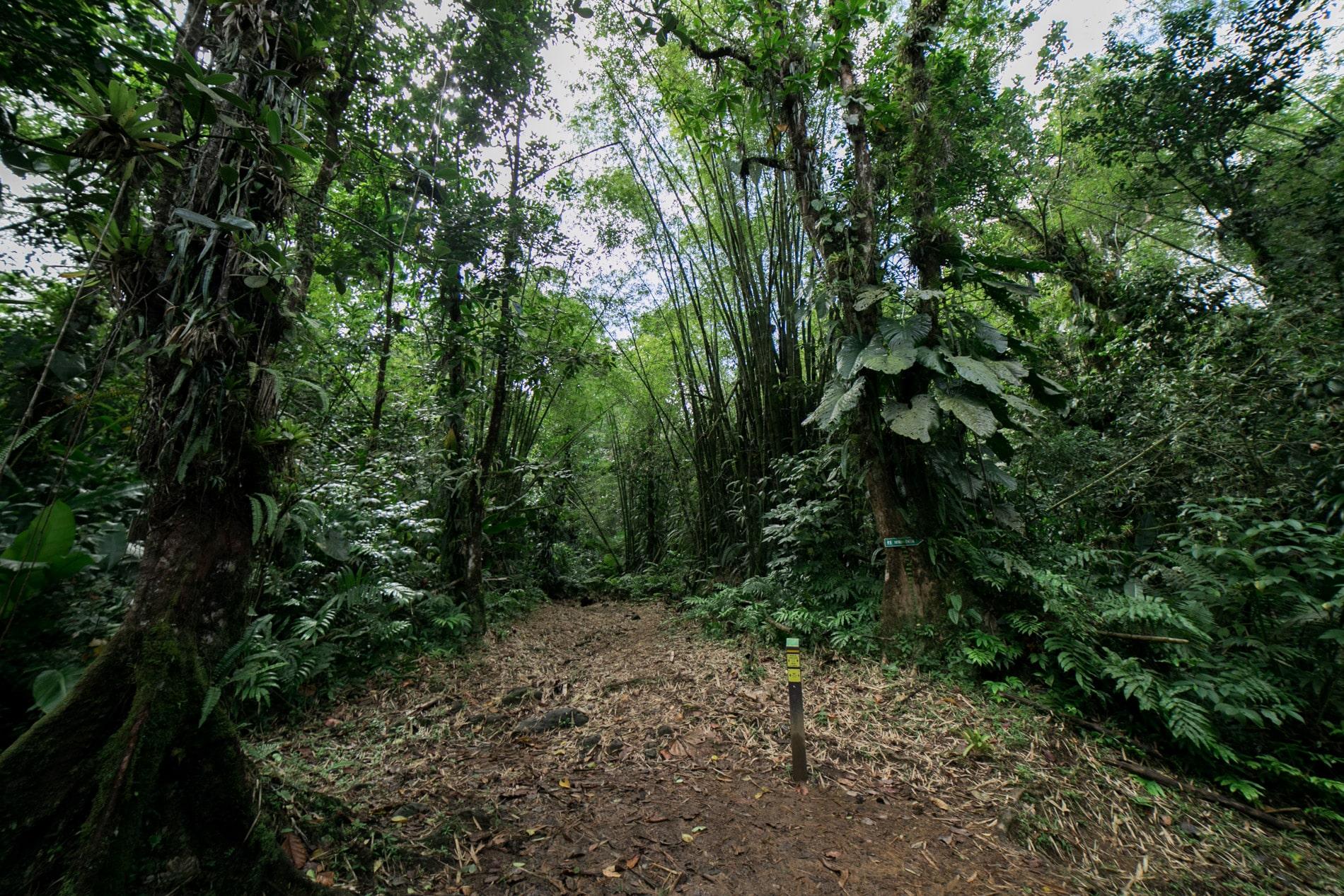 ID5A2141 - Le TOP 15 des activités à faire en Martinique